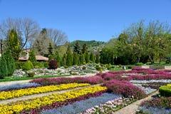 Piękni tulipany w ogródzie Obraz Royalty Free