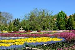 Piękni tulipany w ogródzie Zdjęcie Royalty Free
