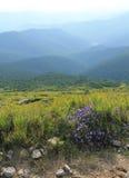 Piękni widoki Karpackie góry fotografia stock