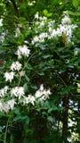 Piękni Wildflower grona Fotografia Royalty Free