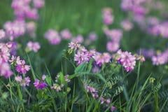 Piękni wildflowers Zdjęcia Royalty Free