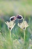 Piękni wiosna kwiaty i zielona trawa Fotografia Stock