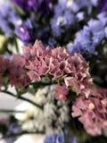 Piękni wysuszeni kwiaty Obraz Stock