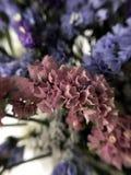 Piękni wysuszeni kwiaty Obrazy Stock