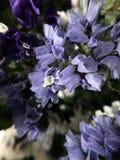 Piękni wysuszeni kwiaty Fotografia Royalty Free