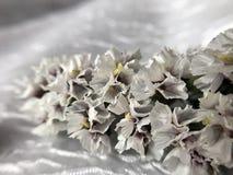 Piękni wysuszeni kwiaty Zdjęcia Royalty Free