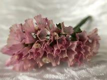 Piękni wysuszeni kwiaty Fotografia Stock