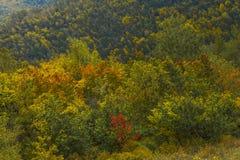 Piękni wzgórza Zdjęcie Royalty Free