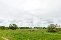 Piękni zieleni pola pod niebieskim niebem w lecie Obraz Stock