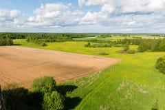 Piękni zieleni pola pod niebieskim niebem w lecie Fotografia Royalty Free