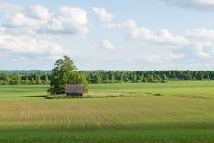 Piękni zieleni pola pod niebieskim niebem w lecie Zdjęcie Stock