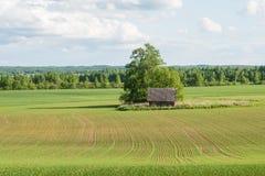 Piękni zieleni pola pod niebieskim niebem w lecie Zdjęcie Royalty Free