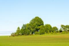 Piękni zieleni pola pod niebieskim niebem w lecie Obrazy Royalty Free