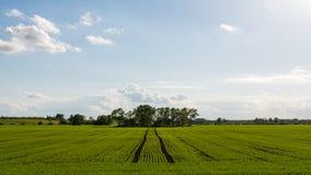 Piękni zieleni pola pod niebieskim niebem w lecie Zdjęcia Royalty Free
