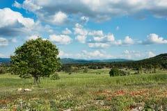 Piękni zieleni pola w górkowatym krajobrazie Zdjęcie Stock