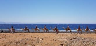 Piękno czerwony morze Egypt obraz stock