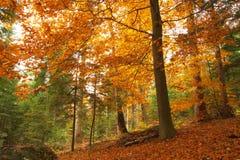 Piękno jesieni lasu krajobrazowy widok Obrazy Royalty Free
