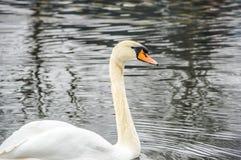 Piękno jezioro Obrazy Stock