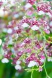 Piękno Kolorowe orchidee Zdjęcia Royalty Free