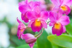 Piękno Kolorowe orchidee Obrazy Royalty Free