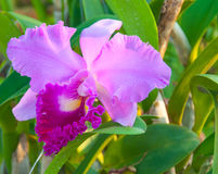 Piękno Kolorowe orchidee Obrazy Stock