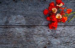 Piękno kwiat L czerwony Caesalpinia pulcherrima lub Sw Zdjęcie Stock