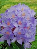 pi?kno kwiat?w fractal lata obrazu obraz royalty free