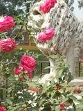 Piękno kwiaty Zdjęcia Royalty Free