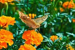 Piękno motyl fotografia royalty free
