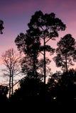 Piękno natura w wakacje zdjęcia royalty free