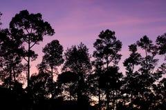 Piękno natura w wakacje zdjęcie royalty free