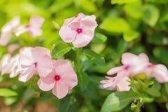 Piękno naturalni kwiaty zdjęcie royalty free