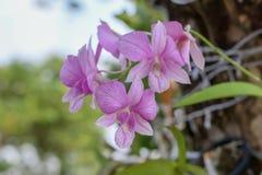 Piękno naturalni kwiaty obraz stock