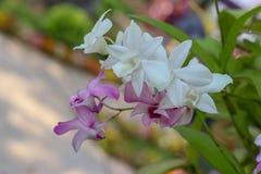 Piękno naturalni kwiaty zdjęcia stock