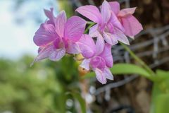 Piękno naturalni kwiaty zdjęcia royalty free