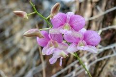 Piękno naturalni kwiaty fotografia royalty free