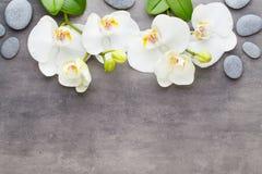 Piękno orchidea na szarym tle Zdrój scena Zdjęcie Royalty Free