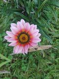 Piękno Papua - nowa gwinea zdjęcie royalty free