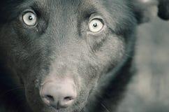 Piękno pies Obrazy Stock
