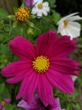 Pi?kno w kwiacie zdjęcia stock
