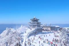 Piękno zima zdjęcia royalty free