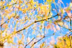 Piękny abstrakcjonistyczny kolorowy kwiat Obraz Stock