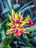 Piękny agawa kwiat Obrazy Stock