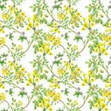 Piękny akwareli lata ogródu kwitnienie Kwitnie Bezszwowego wzór Zdjęcie Royalty Free