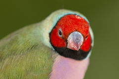 Piękny barwiony ptak Obrazy Royalty Free