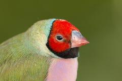 Piękny barwiony ptak Obraz Royalty Free