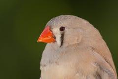 Piękny barwiony ptak Zdjęcia Royalty Free
