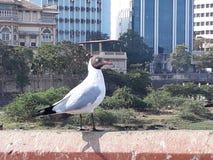 Piękny bird& x27; s spokojni momenty Obrazy Stock