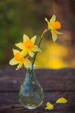 Piękny bukiet daffodils Zdjęcie Stock