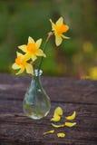 Piękny bukiet daffodils Fotografia Stock